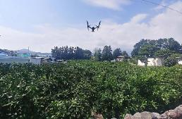 Jeju uses drones for crackdown on illegal distribution of unripe mandarin orange