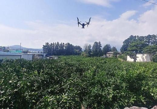 Jeju sử dụng máy bay không người lái để trấn áp việc phân phối trái phép quýt chưa đạt chuẩn