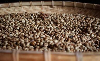 [NNA] 베트남산 커피, 日 수입량 1위
