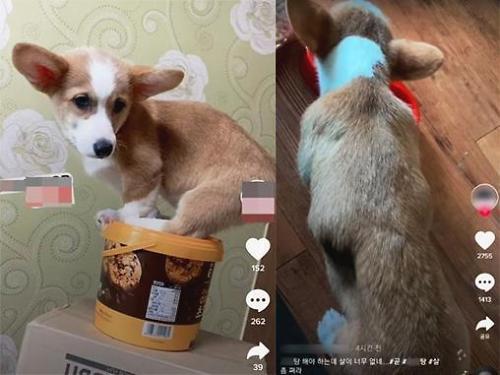 """뼈가 드러날 정도…""""틱톡 속 학대받는 강아지 구해주세요"""" 靑 청원"""