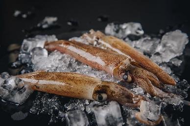 오징어 가격 5년 간 1.8배↑… 자급률은 3분의 1 토막