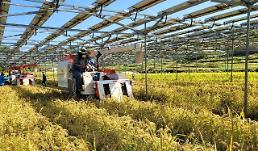 .Researchers develop hybrid farming technique to use idle land under solar power panels.