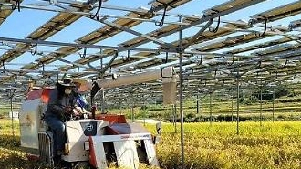 Các nhà nghiên cứu Hàn Quốc phát triển kỹ thuật canh tác lai để sử dụng đất trống dưới các tấm pin năng lượng mặt trời