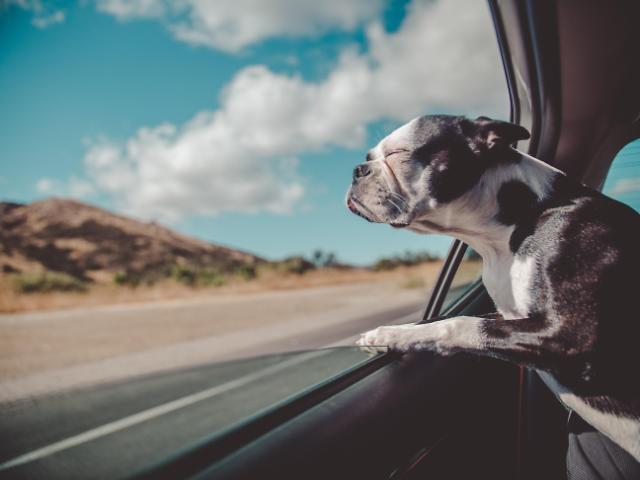 [NNA] 印, 코로나로 애완동물 운송 수요 급증