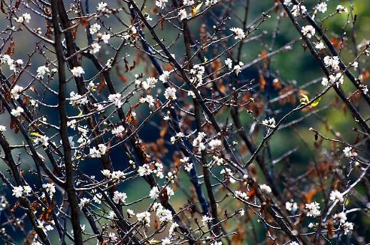 春花在秋季绽放 原是误会一场