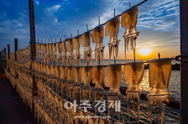 영덕군, 오징어 어획량 순풍...지난해보다 어획량 늘고 가격도 안정세