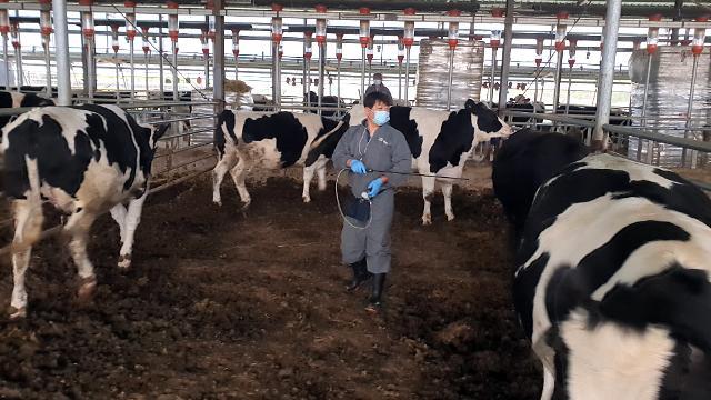 구제역 비상...11월부터 소·돼지 분뇨 권역 밖 이동 제한