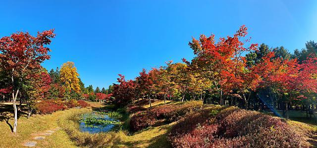 [포토] 남이섬의 가을풍경
