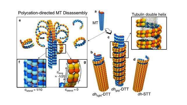 카이스트, 단백질로 엮어낸 이중나선 개발