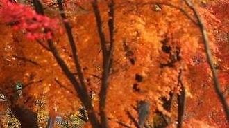 Quang cảnh mùa thu muộn ở cung Changgyeong