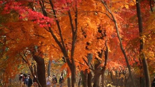 Sắc thu cuối mùa ở Changgyeonggung