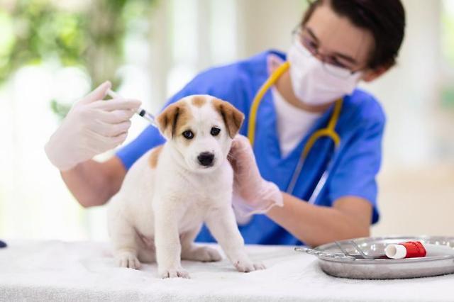 """소비자원 """"반려동물 심장사상충약 가격 동물병원·약국 간 차이 커…최대 110%"""""""