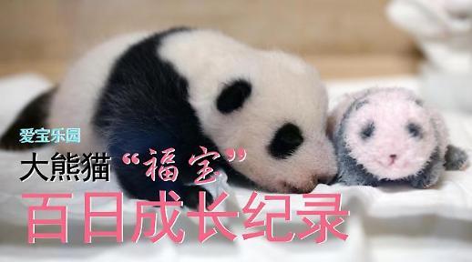 "[AJU VIDEO] 爱宝乐园大熊猫 ""福宝""百日成长纪录"