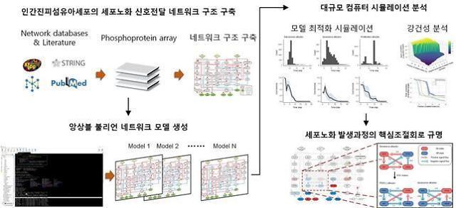 카이스트, 늙은 세포를 젊은 세포로…역노화 기술 개발