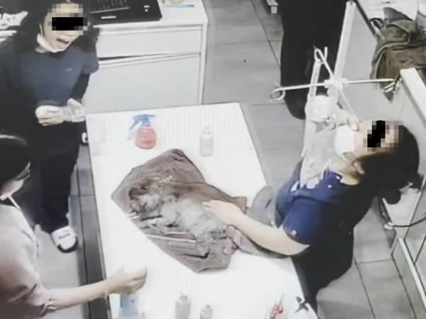 마취 반려견에 탈취제 뿌리며 박장대소한 동물병원, 국민청원 10만 돌파