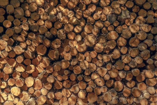 [NNA] 中, 호주 2개주 수입목재 해충 발견, 금수조치 확대