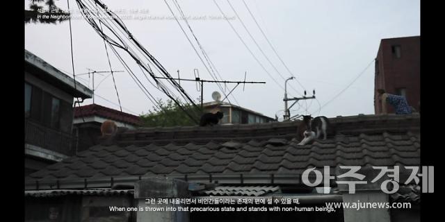 길고양이 위해 지붕 위로 올라간 작가...홍이현숙 개인전: 휭, 추-푸
