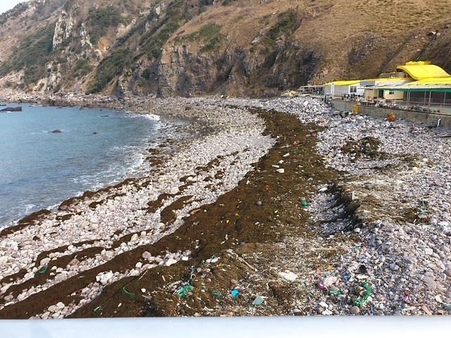 韩国西海岸城市:中国铜藻侵扰不断海滩变垃圾场