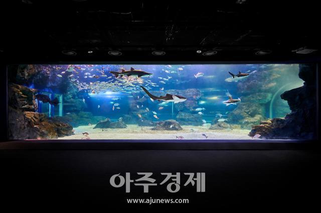 3만마리 해양생물 한눈에…아쿠아플라넷 광교, 이달 19일 오픈