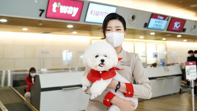 티웨이항공, 반려동물 위한 tpet 서비스…작년 반려동물 탑승 59% 증가
