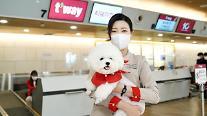 ティーウェイ航空、ペットのためのt'petサービス…昨年、ペットの搭乗59%増加