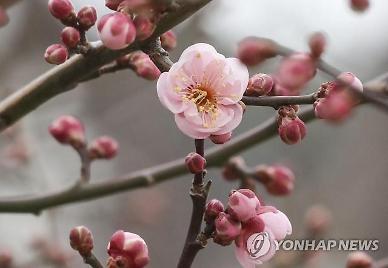 [내일날씨] 출근길 한파 계속...낮부터 영상 기온 회복