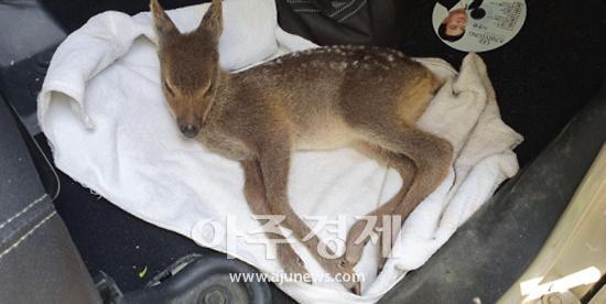 성남시-야생생물관리협회 야생동물 구조사업 협약 맺어