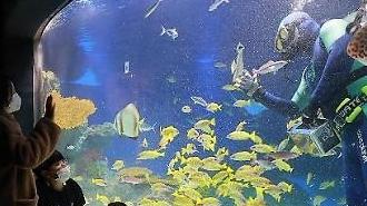 Cuộc gặp gỡ với các sinh vật dưới lòng đại dương