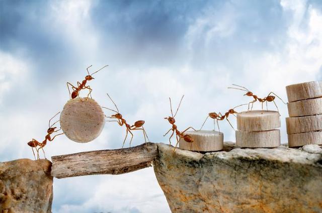 [환율도 움직이는 개미] 개미들 주로 찾는 '맛집' 증권사? 미래에셋∙삼성∙키움∙한투證 `빅4'