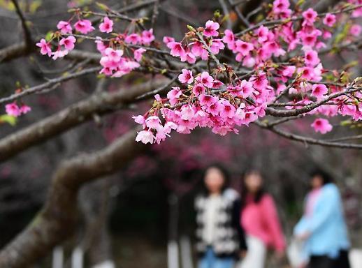 【亚洲云图】福州春意盎然百花开
