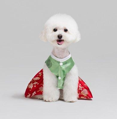 Pet lovers seek special Hanbok costumes to celebrate Lunar New Year