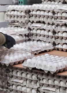 美国鸡蛋亮相韩超市