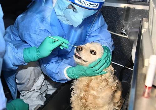 首尔市实施首例宠物狗新冠病毒核酸检测