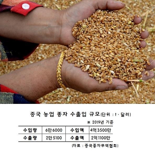 [특파원스페셜]중국의 또 다른 급소 수입산 종자
