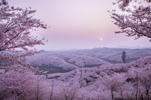 【亚洲云图】春光无限 缤纷如画