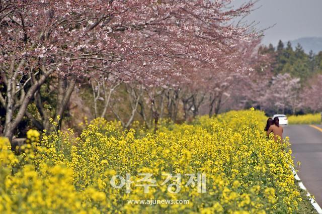 [벚꽃 개화] 코로나19에도 꽃망울 툭…비대면으로 즐길 벚꽃 명소는?