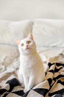 近三成韩家庭养宠物 月均花费约800元