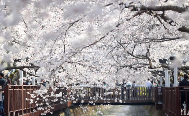 """[코로나19] 정부 """"내일부터 봄철 나들이 특별방역…꽃구경으로 감염확산 우려"""""""