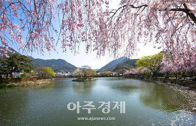 봄꽃 여행 즐기기 좋은 지역별 명소 모여라