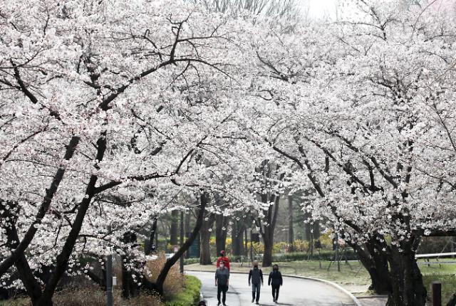 """""""벚꽃 구경 막아라..."""" 여의도 한강공원 주차장 폐쇄한다"""