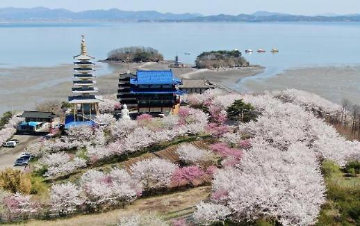 韩国今年樱花开花时间创历史最早纪录
