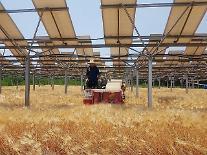 ハンファQセルズ、「営農型太陽光」国策課題の共同研究機関に選定