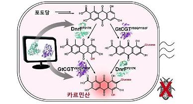 Researchers discover method to mass-produce carminic acid from glucose