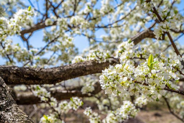 春天只有樱花可赏?首尔市内这些春花可别错过