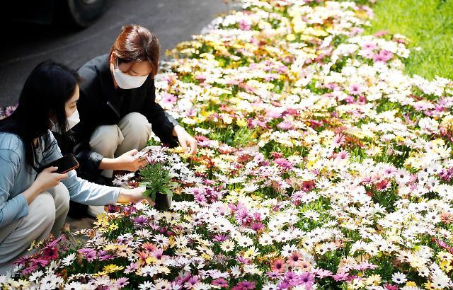 [포토] 봄꽃 활짝