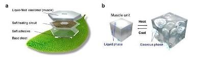 Researchers develop leaf-like soft robot capable of maneuvering underwater