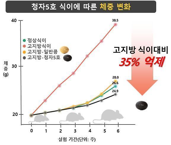 """농진청 """"우리 검정콩 비만과 대사증후군 예방 효능 입증"""""""