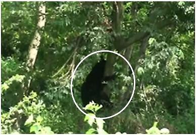 시지바이오, 골대체제 '노보시스'로 멸종위기 반달가슴곰 구해