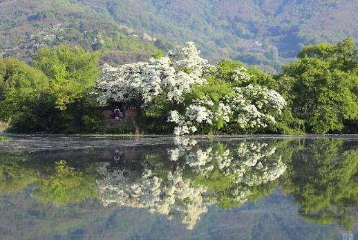 密阳位良池绿意盎然