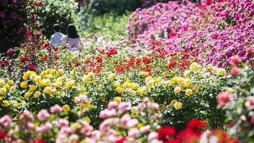 Vườn hồng Everland